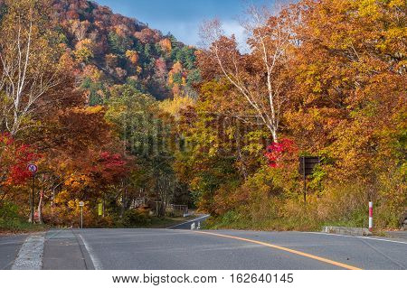 Road with colorful trees in Autumn on Mt.Shigakogen