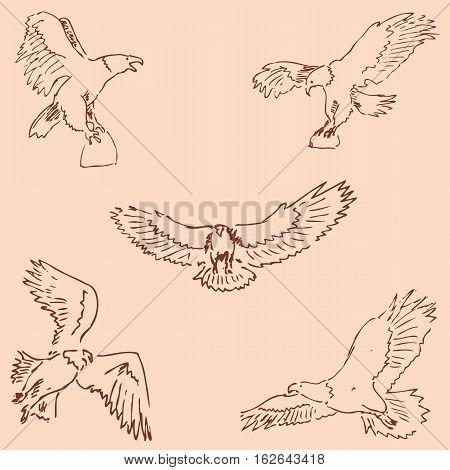 Eagles. Sketch pencil. Drawing by hand. Vintage colors Vector image
