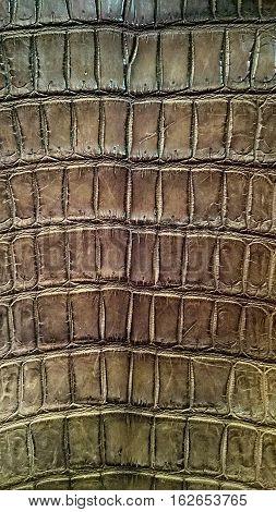 Crocodile Leather Crocodile Skin fashion  background, bag