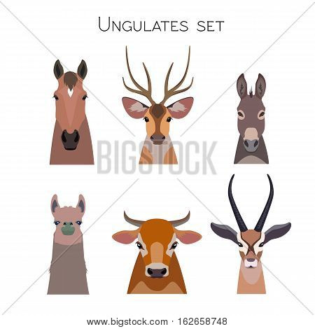 Vector ungulates cloven hoofed animals set. Lama deer, antelope, donkey horse cow bull illustration isolated. Poster banner, print, advertisement, web design element object. Flat, cartoon style