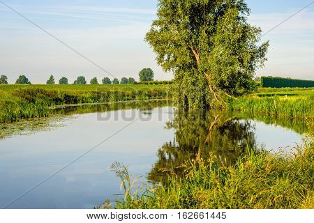Crooked willow tree reflected in the mirror smooth water surface of a small stream on a windless day in the summer season.