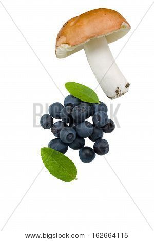 Bilberry On A White Background With  Mushroom