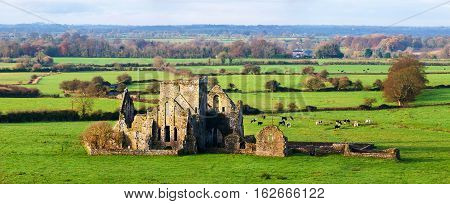 Cashel Ireland. Panoramic view of ruins of an Hore Abbey in Cashel Ireland. It is a ruined Cistercian monastery and famous landmark in Tipperary. Landscape with cows