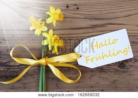 Label With English Text Hallo Fruehling Means Hello Spring. Sunny Yellow Spring Narcissus Or Daffodil With Ribbon. Aged, Rustic Wodden Background. Greeting Card For Spring Season