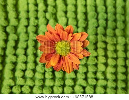 An beautiful orange sunflower with a green background.
