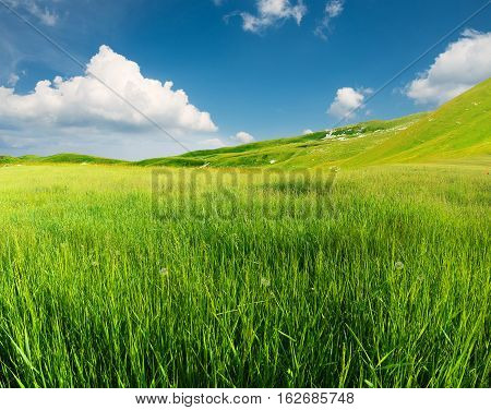 Green field in the mountain valley. Beautiful summer landscape