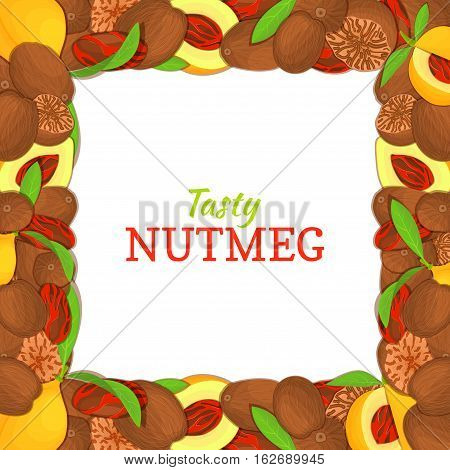 Square frame composed of delicious nutmeg. Vector card illustration. Nuts spice frame, nutmeg fruit in the shell, whole, shelled, leaves, appetizing looking for packaging design of healthy food
