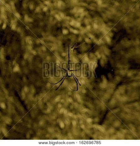 Spider art,and Cobweb on nature.I like spider.