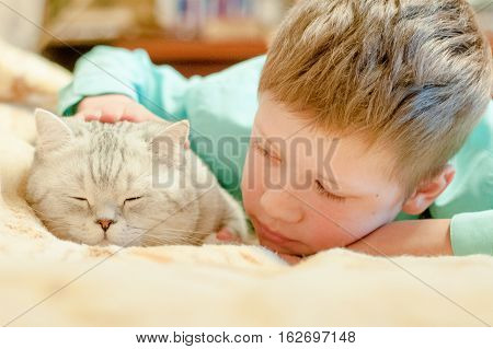 cat breed British Shorthair and a boy lying on the bed and dozing