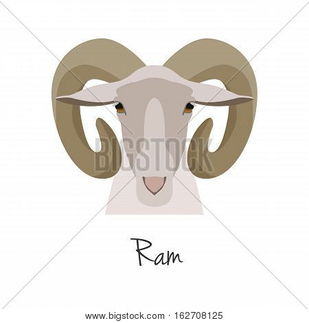 Vector flat cartoon horned ram head, farm animal. , goat muzzle isolated. Flat style, cartoon object. poster banner print advertising, design element.