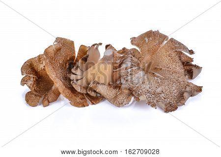 Thai Mushroom (hedlom) (Lentinus polychrous Lev.) isolated on white background.