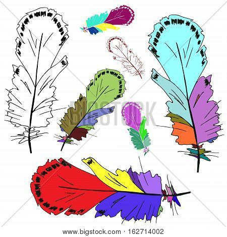 Hand illustration bird feather. Symbol of writing and learning. The old way of writing. Vector graphic design. Isolated on white background.