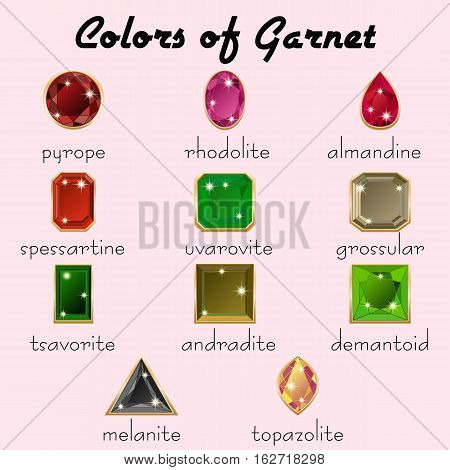 Kinds of mineral Garnet in crystals with different types of cuts in realistic shapes in natural tints of different colors with golden edging. Vector illustration