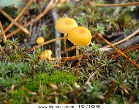 Lonely toadstool mushroom is growing in a thicket of grass