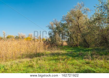 Fall landscape with forest clearing in central Ukraine