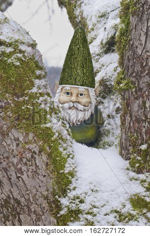 Closeup of Gnome in tree with green hat and suit. Winter time with snow