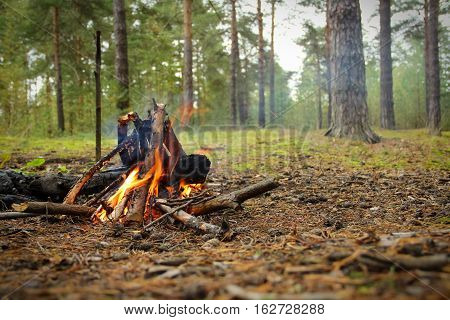 The bonfire in the pine forest. A bonfire in the foreground.  Pines in the background. Focus on bonfire.