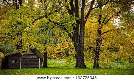 Autumn trees and a woodshed in russian village. Autumn tree, the leaves partly yellowed. Focus on the trunk.