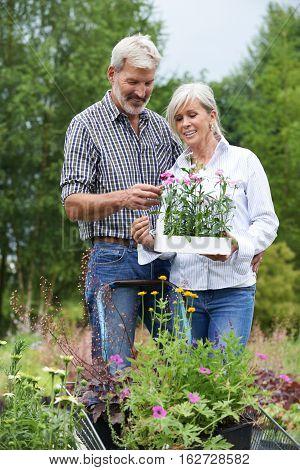 Mature Couple Shopping At Outdoor Garden Center