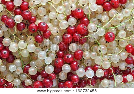 stack of mixed red and white currant
