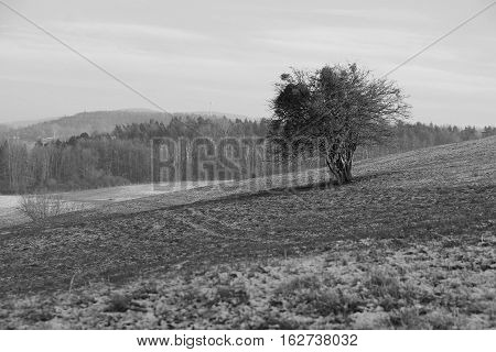 black and white photo of a lonely bush on the field