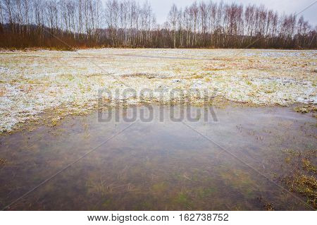 Winter Meadow With Frozen Puddles