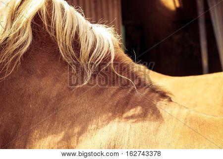 Brown horse mane close up texture blonde hair