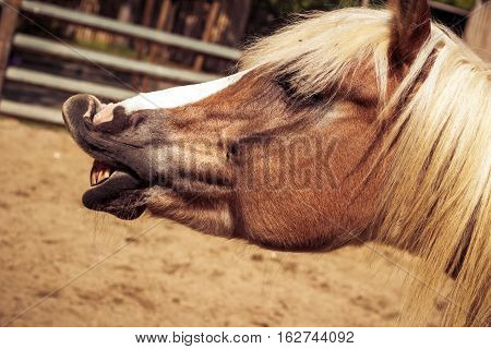 Beautiful brown horse with white arrow and mane