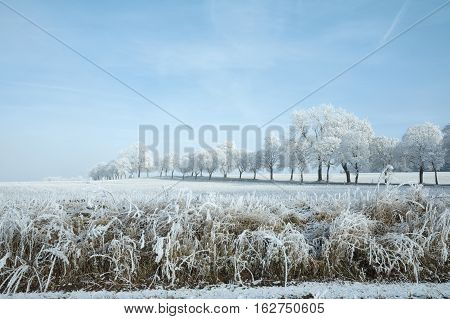 Winter landscape and snow wrapped trees in Sumava Czech republic. Frost-covered meadows and frosted trees in the Sumava. South Bohemia.