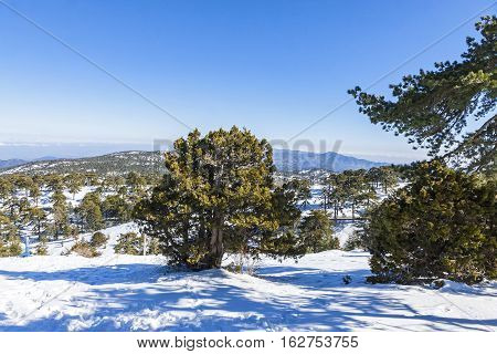 Winter Landscape In Troodos Mountains, Cyprus