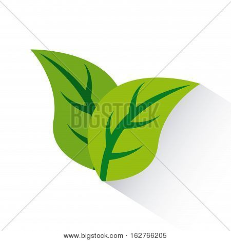 green leaves icon over white background. colorful design. vector illustration