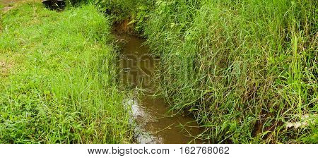 a river in the middle of grass field photo taken in Bogor Indonesia java