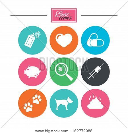 Veterinary, pets icons. Dog paws, syringe and magnifier signs. Pills, heart and feces symbols. Colorful flat buttons with icons. Vector