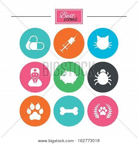 Veterinary, pets icons. Paw, syringe and bone signs. Pills, cat and doctor symbols. Colorful flat buttons with icons. Vector