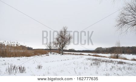 dry tree and grass reeds on river in winter snow landscape