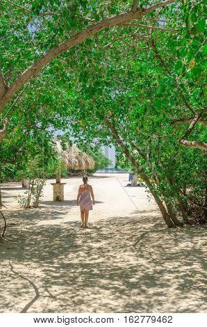 Looking Through The Mangrove Trees In Aruba Beach