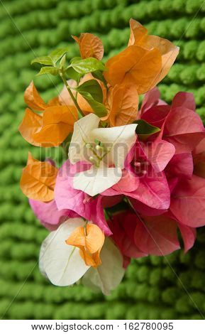A collection of orange pink and white flowers with a green background in portrait.