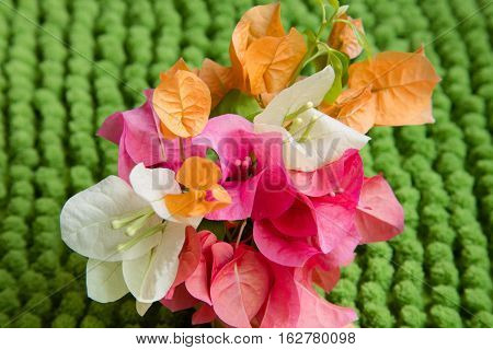 A collection of orange pink and white flowers with a green background in landscape.