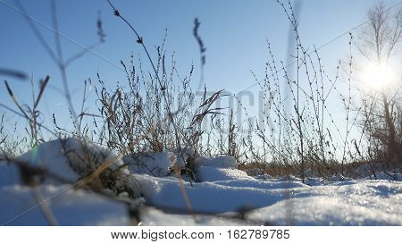dry grass sways in wind winter snow nature landscape field steppe