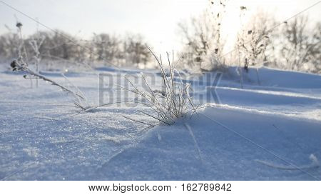 frozen sunlight grass nature sways in wind in the winter snow falls beautiful sun glare