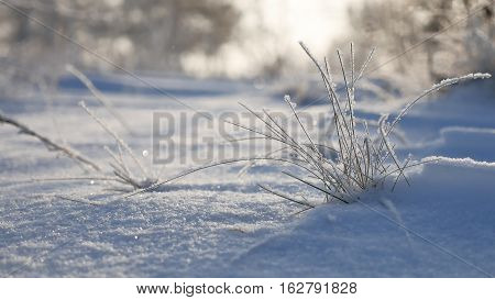 frozen grass sways in the wind in winter snow falls nature sunlight beautiful sun glare