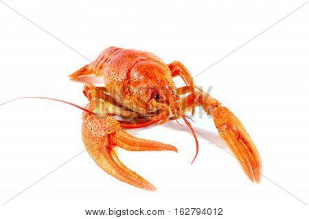 prepared for eating fresh boiled crayfish as part of a nice dinner