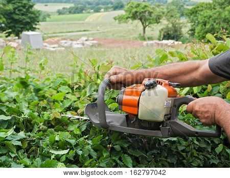 Man cutting a hedge with a gasoline hedge trimmer