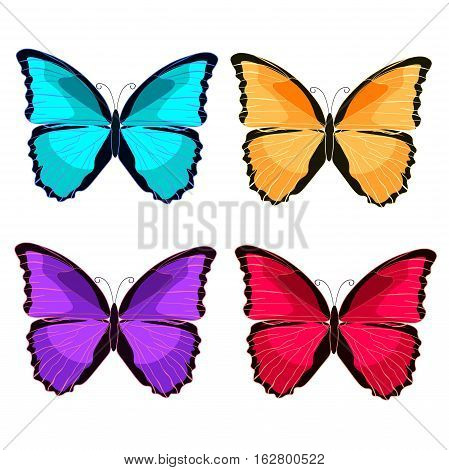 Set Blue Morpho The Butterfly Monarch  Vector Illustration