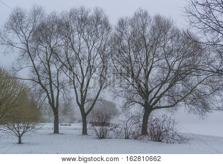 Winter mist in the park with trees and bushes next to the river monocle lens