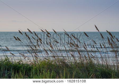 Sea Oats Blowing In The Wind