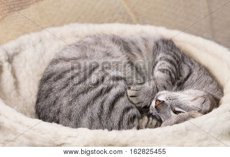 Funny resting cat, sleepy cat, young kitten on a sofa, half sleepy cat with open eyes