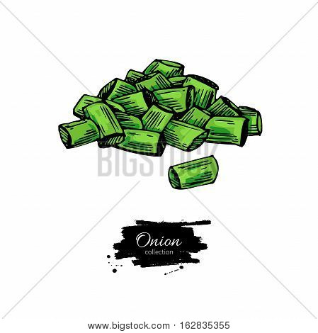 Green spring onion sliced heap. Hand drawn vector illustration. Isolated Vegetable object. Detailed vegetarian food drawing. Farm market product.Great for menu, label, icon