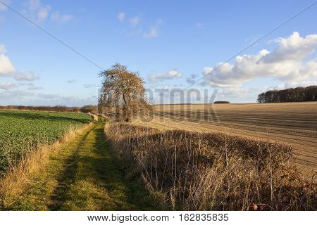 Scenic Bridleway In Autumn