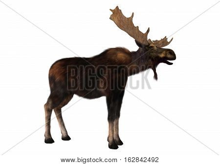 3D rendering of a male moose isolated on white background